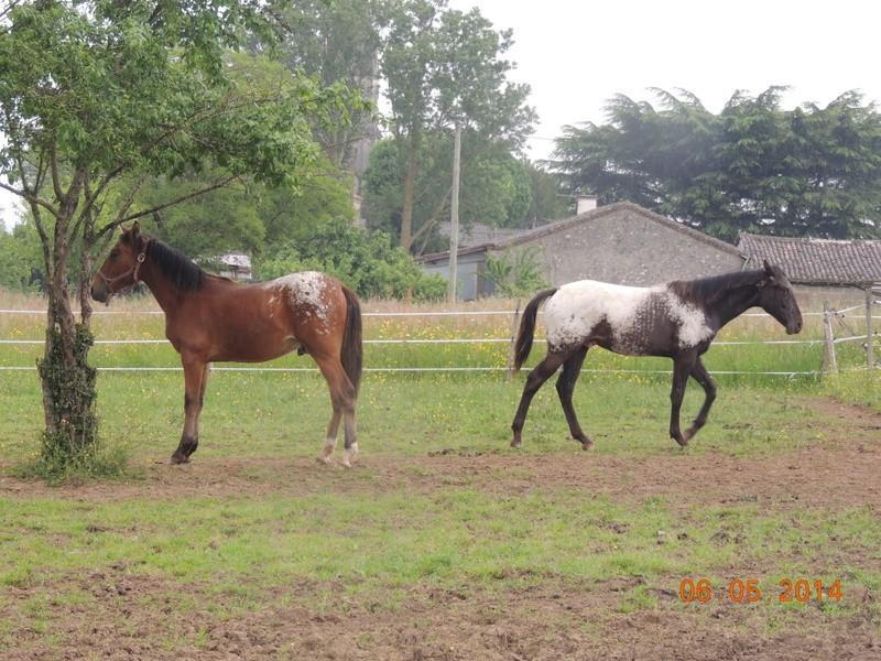 Mes chevaux, un mélange d'un peu tout le monde! - Page 9 Dodge_51