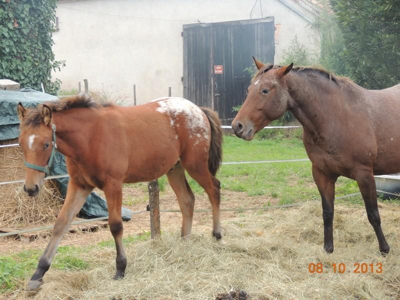 Mes chevaux, un mélange d'un peu tout le monde! - Page 8 Dynami20