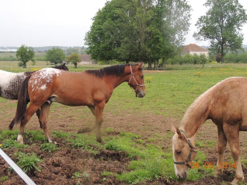 Mes chevaux, un mélange d'un peu tout le monde! - Page 9 Dynami42