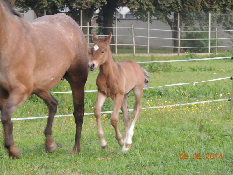Les poulains né à l'Appaloosa IJ Farm Equali16