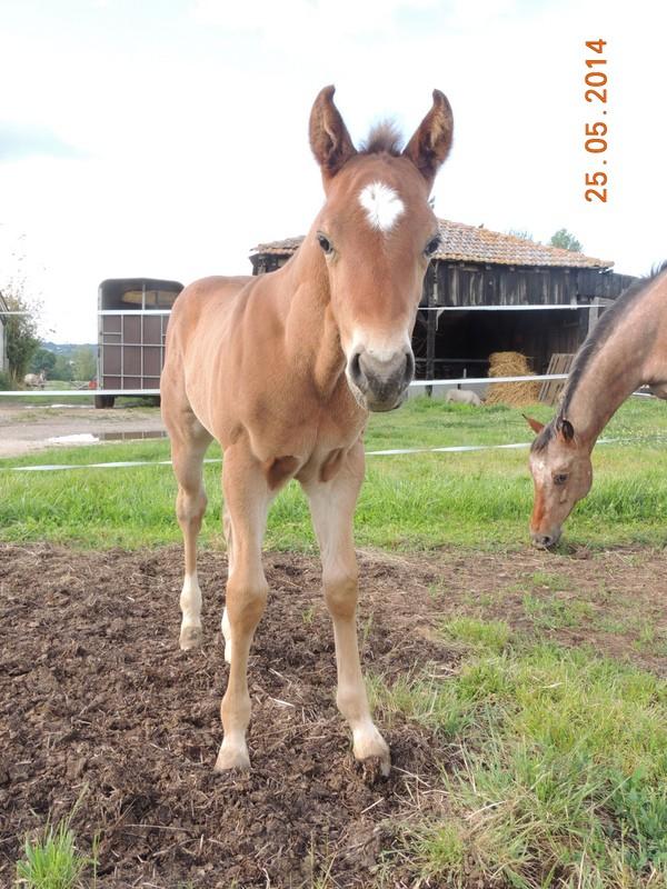 Les poulains né à l'Appaloosa IJ Farm Equali23