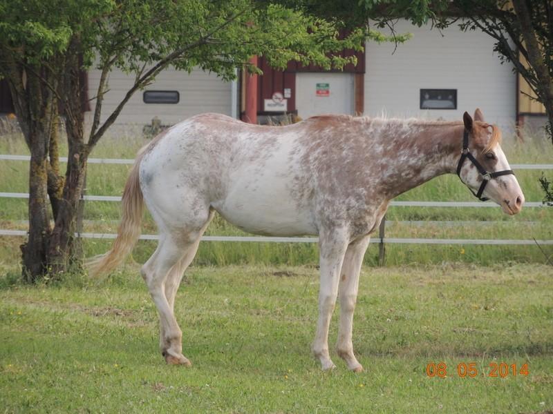 Mes chevaux, un mélange d'un peu tout le monde! - Page 9 Fantas10