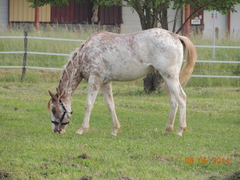 Mes chevaux, un mélange d'un peu tout le monde! - Page 9 Fantas11