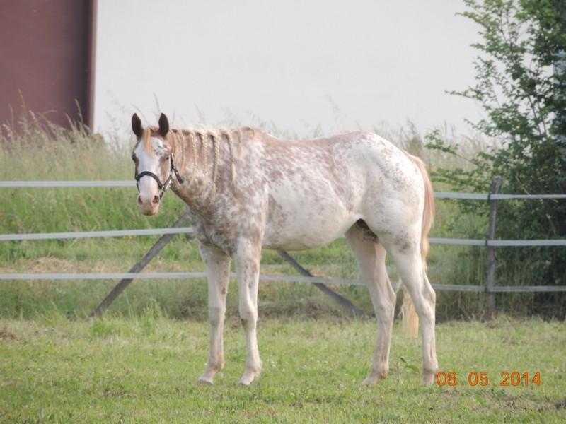 Mes chevaux, un mélange d'un peu tout le monde! - Page 9 Fantas13