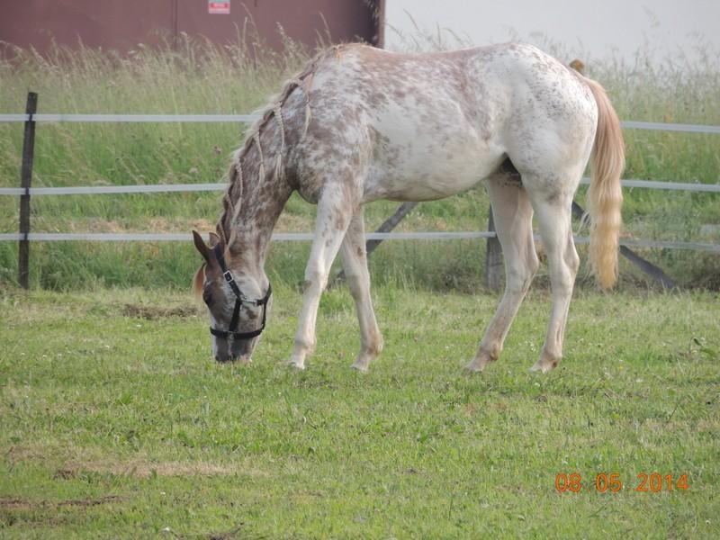 Mes chevaux, un mélange d'un peu tout le monde! - Page 9 Fantas14