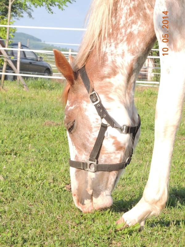 Mes chevaux, un mélange d'un peu tout le monde! - Page 9 Fantas16