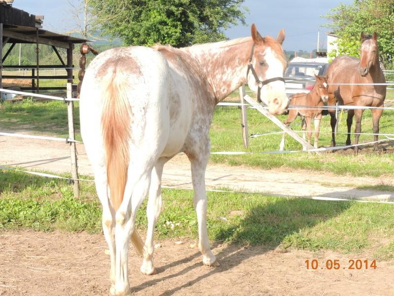 Mes chevaux, un mélange d'un peu tout le monde! - Page 9 Fantas17