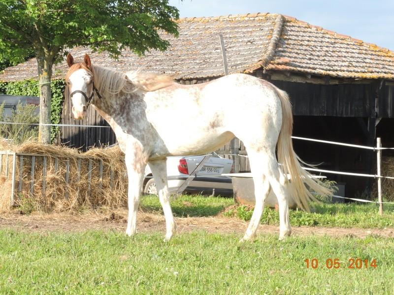 Mes chevaux, un mélange d'un peu tout le monde! - Page 9 Fantas18