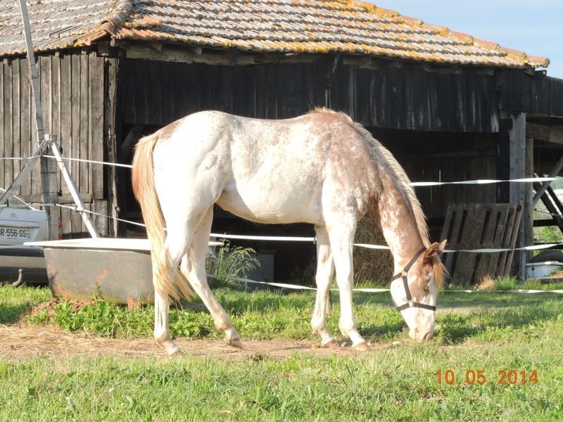 Mes chevaux, un mélange d'un peu tout le monde! - Page 9 Fantas20