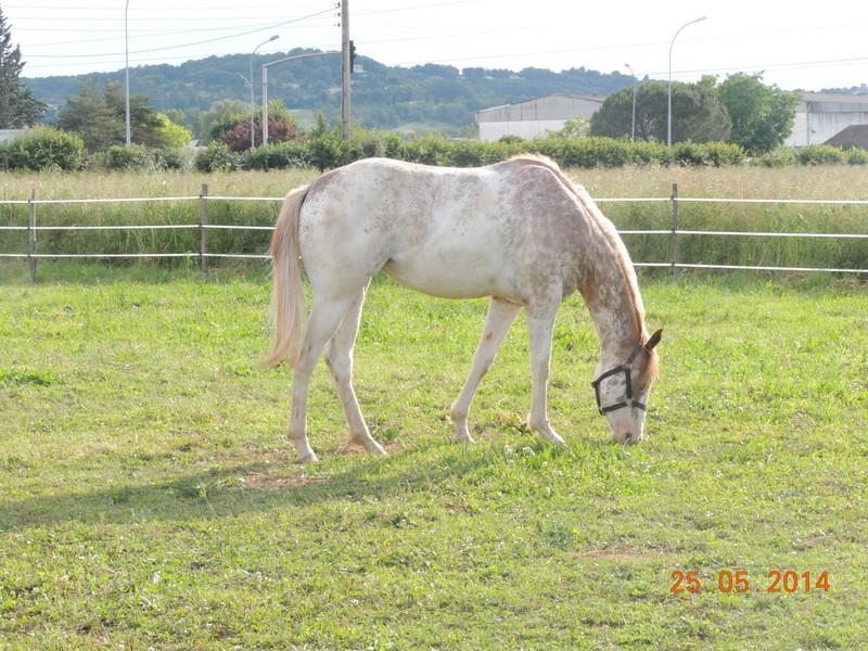 Mes chevaux, un mélange d'un peu tout le monde! - Page 10 Fantas23
