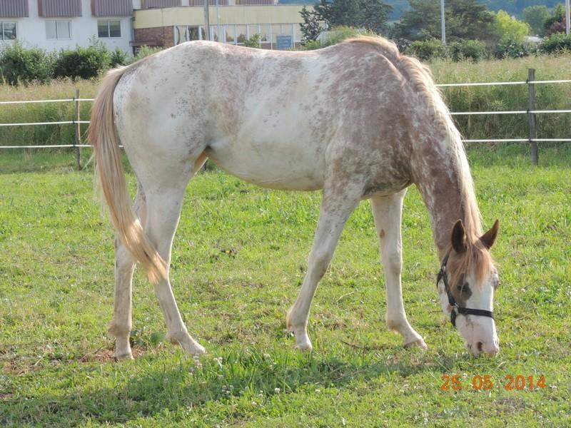 Mes chevaux, un mélange d'un peu tout le monde! - Page 10 Fantas24