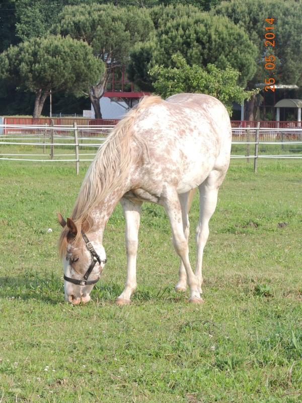 Mes chevaux, un mélange d'un peu tout le monde! - Page 10 Fantas25