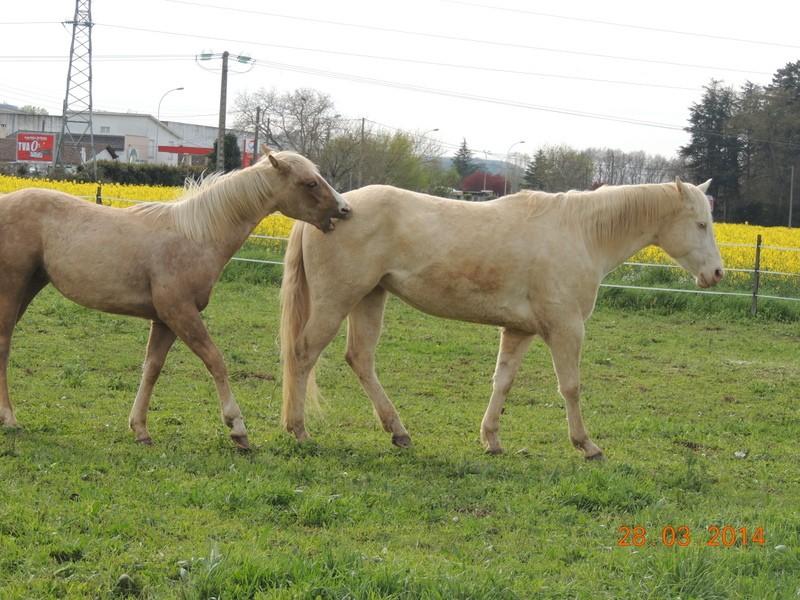 Mes chevaux, un mélange d'un peu tout le monde! - Page 8 Glitte54