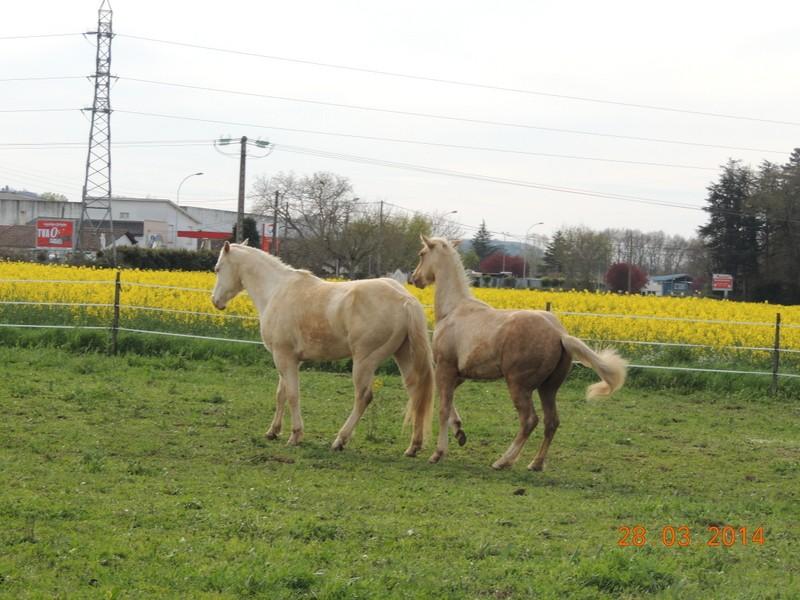 Mes chevaux, un mélange d'un peu tout le monde! - Page 8 Glitte55