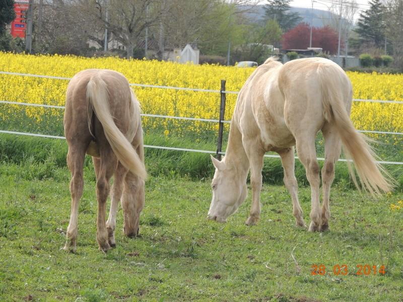 Mes chevaux, un mélange d'un peu tout le monde! - Page 8 Glitte56