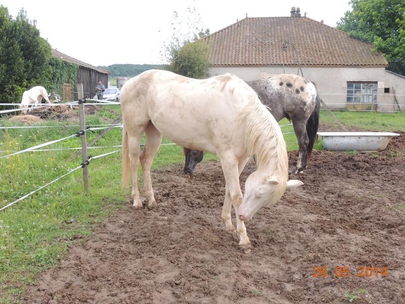 Les chevaux de l'Appaloosa IJ Farm - Page 2 Glitte72