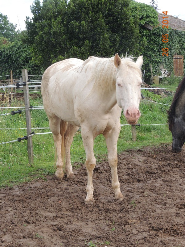 Les chevaux de l'Appaloosa IJ Farm - Page 2 Glitte73