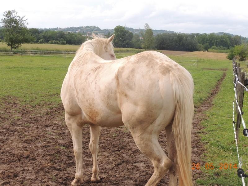 Les chevaux de l'Appaloosa IJ Farm - Page 2 Glitte75