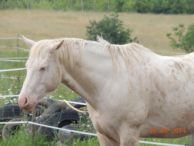 Les chevaux de l'Appaloosa IJ Farm - Page 2 Glitte77