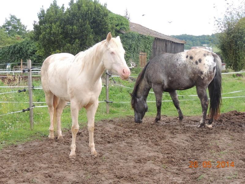 Les chevaux de l'Appaloosa IJ Farm - Page 2 Glitte80