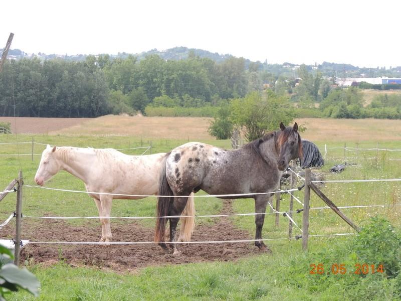 Les chevaux de l'Appaloosa IJ Farm - Page 2 Glitte81