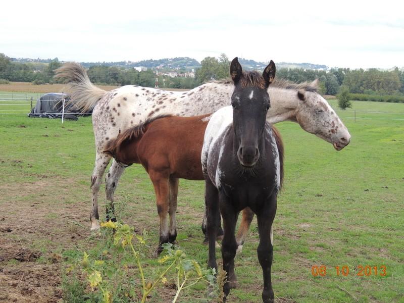 Mes chevaux, un mélange d'un peu tout le monde! - Page 8 Groupe10