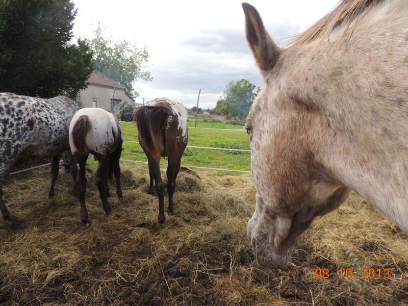 Mes chevaux, un mélange d'un peu tout le monde! - Page 8 Groupe11
