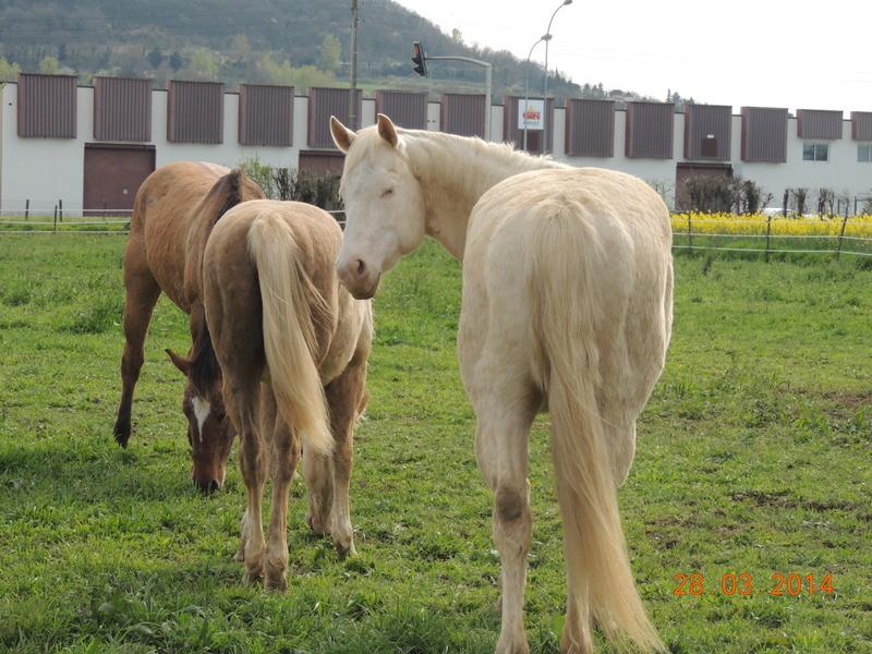 Mes chevaux, un mélange d'un peu tout le monde! - Page 8 Groupe12