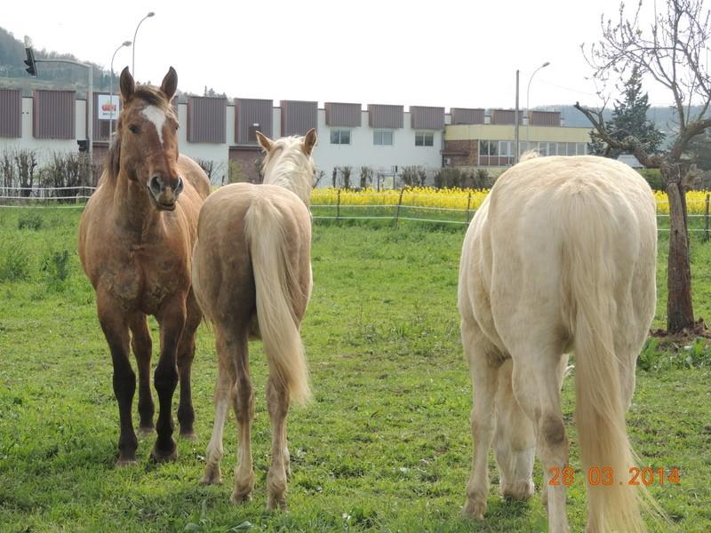 Mes chevaux, un mélange d'un peu tout le monde! - Page 8 Groupe13