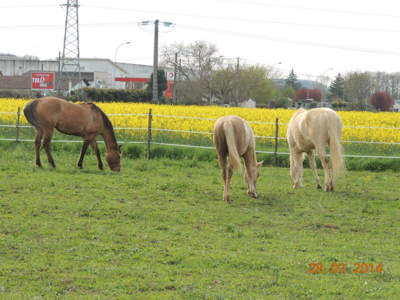 Mes chevaux, un mélange d'un peu tout le monde! - Page 8 Groupe14