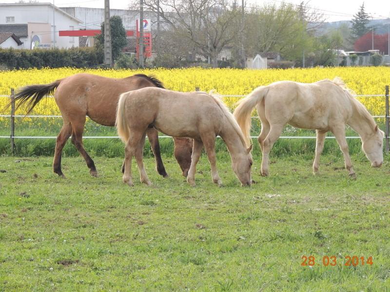 Mes chevaux, un mélange d'un peu tout le monde! - Page 8 Groupe15