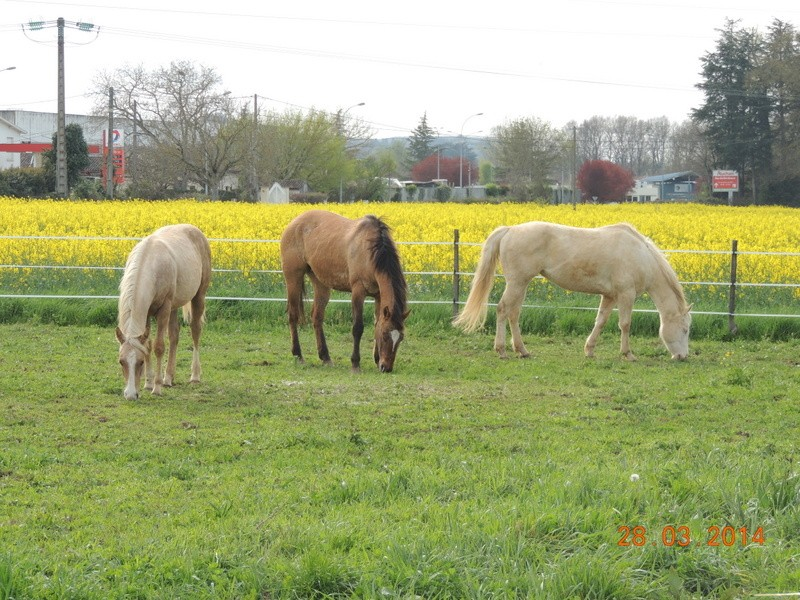 Mes chevaux, un mélange d'un peu tout le monde! - Page 8 Groupe16