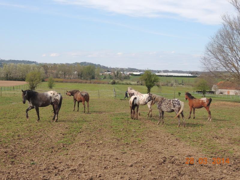 Mes chevaux, un mélange d'un peu tout le monde! - Page 8 Groupe17