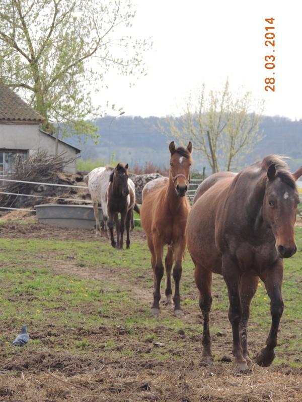Mes chevaux, un mélange d'un peu tout le monde! - Page 8 Groupe18