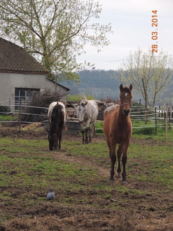 Mes chevaux, un mélange d'un peu tout le monde! - Page 8 Groupe19