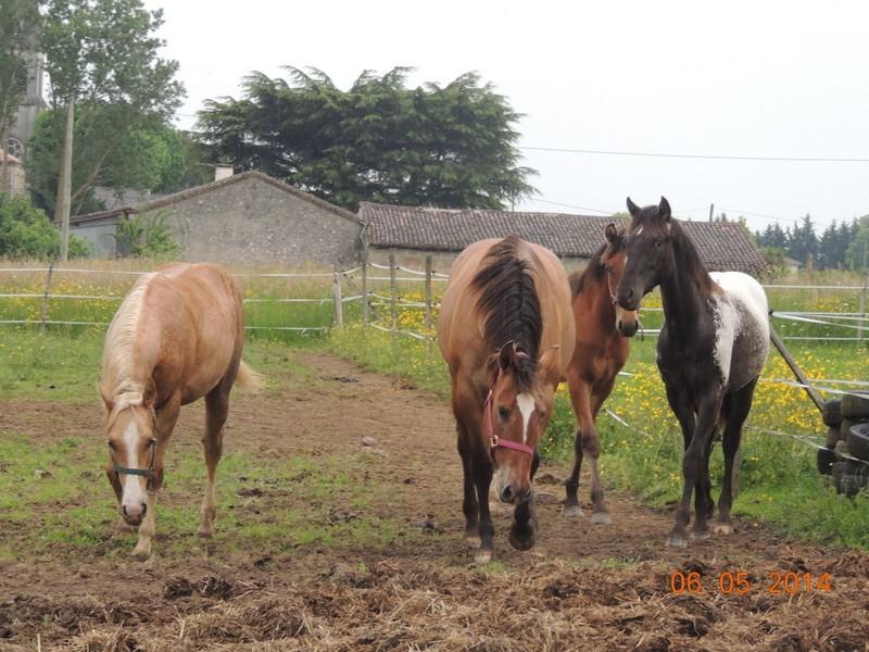 Mes chevaux, un mélange d'un peu tout le monde! - Page 9 Groupe20