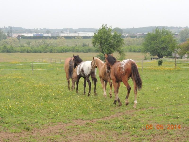 Mes chevaux, un mélange d'un peu tout le monde! - Page 9 Groupe21