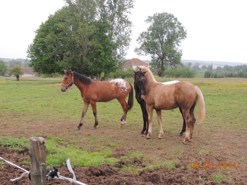 Mes chevaux, un mélange d'un peu tout le monde! - Page 9 Groupe22