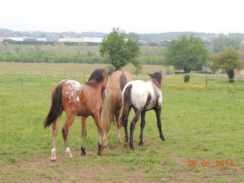 Mes chevaux, un mélange d'un peu tout le monde! - Page 9 Groupe23