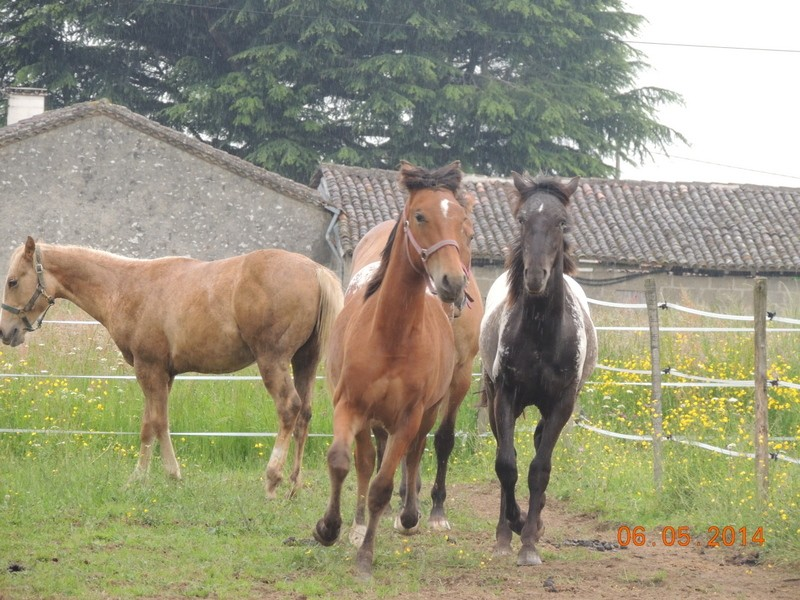 Mes chevaux, un mélange d'un peu tout le monde! - Page 9 Groupe24