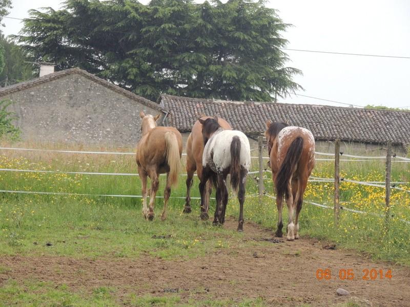 Mes chevaux, un mélange d'un peu tout le monde! - Page 9 Groupe26
