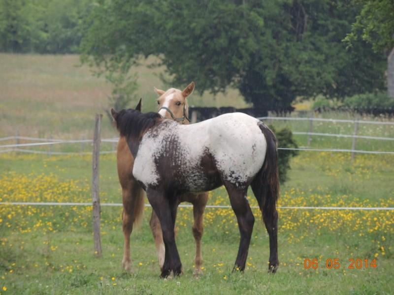 Mes chevaux, un mélange d'un peu tout le monde! - Page 9 Intere40