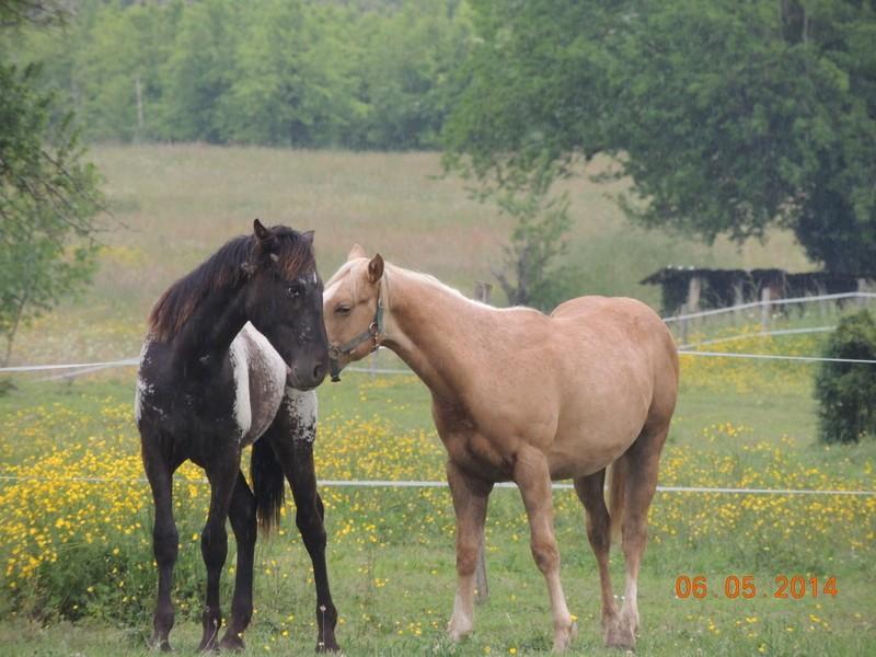 Mes chevaux, un mélange d'un peu tout le monde! - Page 9 Intere41