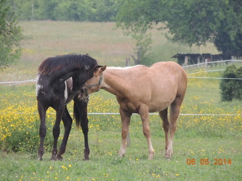 Mes chevaux, un mélange d'un peu tout le monde! - Page 9 Intere42