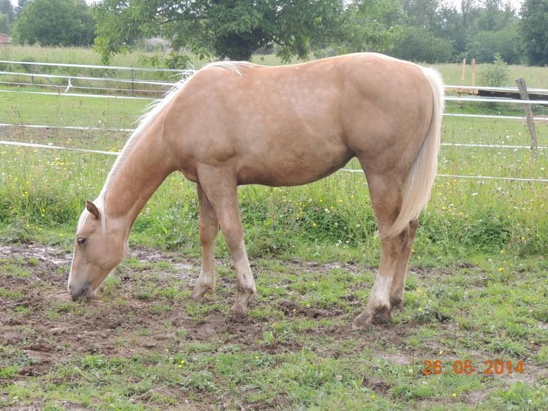 Les chevaux de l'Appaloosa IJ Farm - Page 2 Intere43