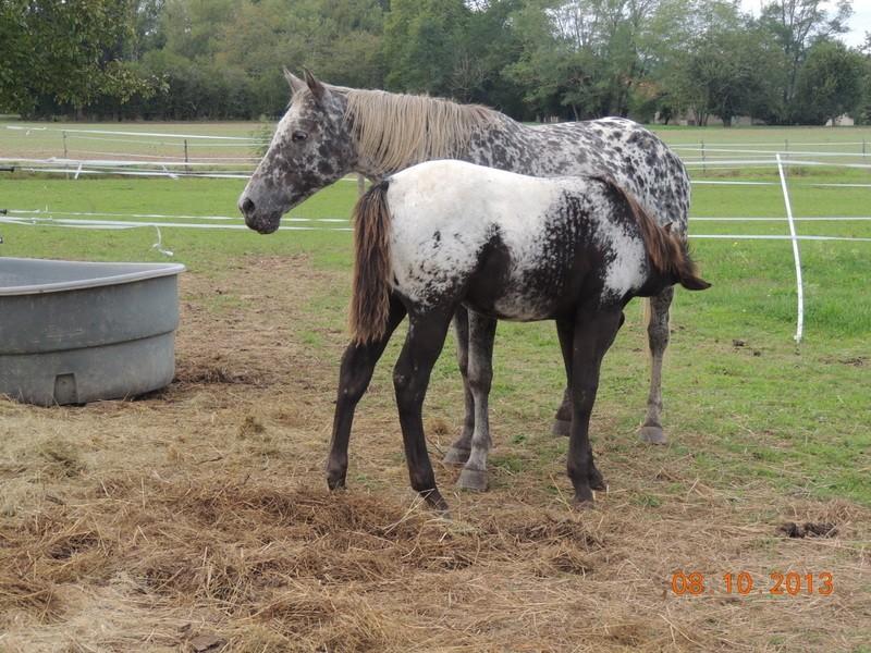 Mes chevaux, un mélange d'un peu tout le monde! - Page 8 Opium_13