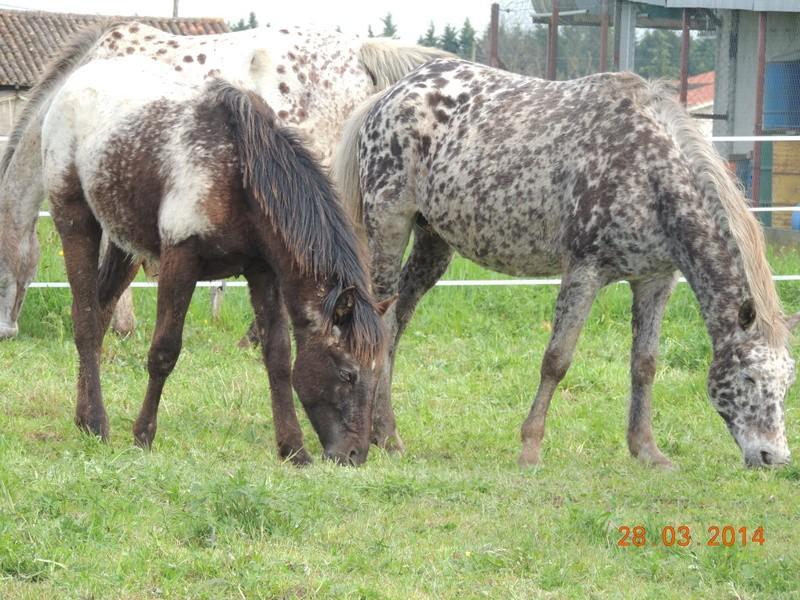 Mes chevaux, un mélange d'un peu tout le monde! - Page 8 Opium_19