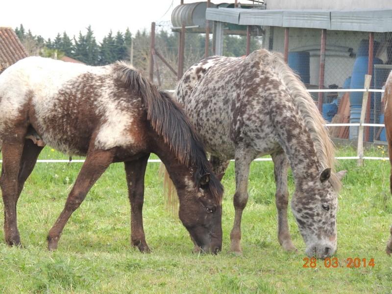 Mes chevaux, un mélange d'un peu tout le monde! - Page 8 Opium_20