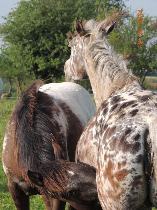 Mes chevaux, un mélange d'un peu tout le monde! - Page 8 Opium_22