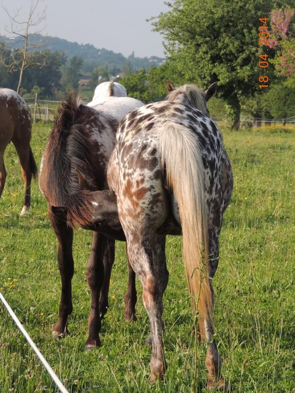 Mes chevaux, un mélange d'un peu tout le monde! - Page 8 Opium_23